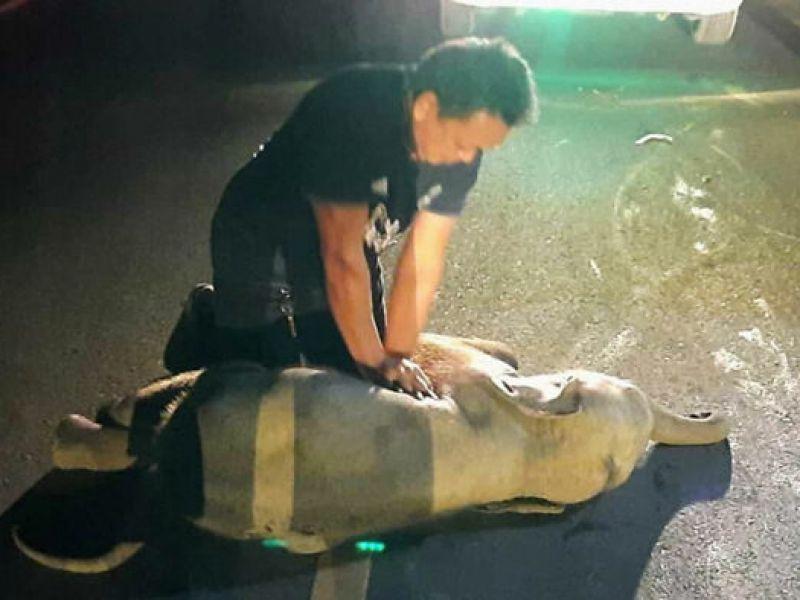 un-uomo-riuscito-salvare-elefantino-rianimazione-cardiopolmonare-v3-489704-800x600-1