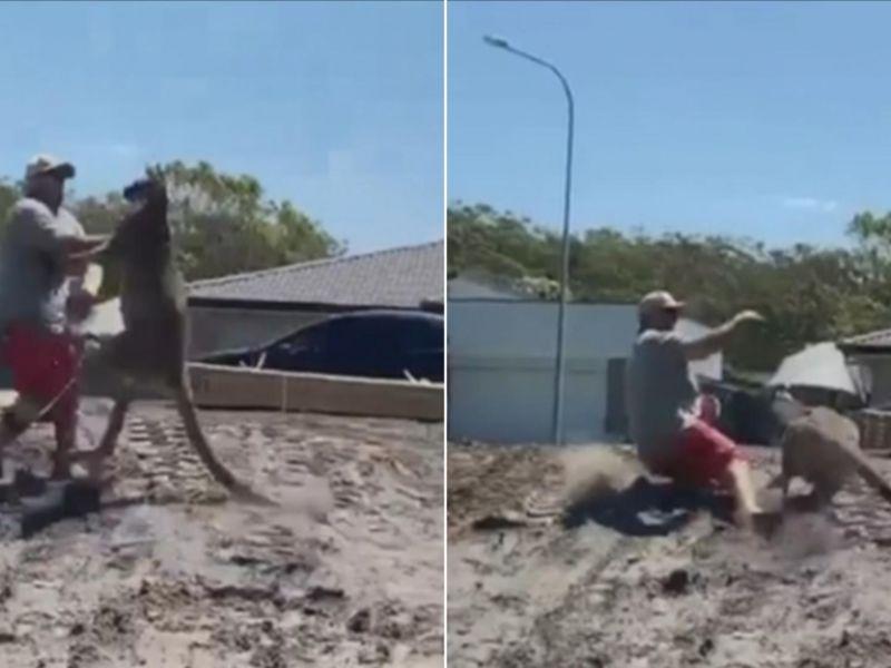 ecco-video-virale-dell-uomo-preso-pugni-canguro-natale-v3-491174-800x600-1