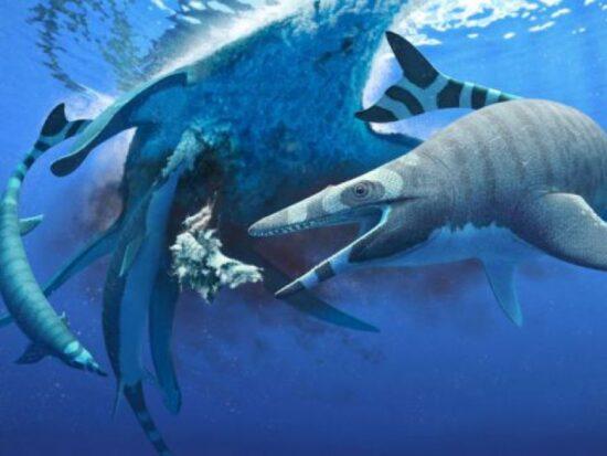 scoperti-fossili-mostro-marino-miniatura-terribili-denti-squalo-v3-495575-800x600-1