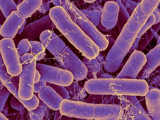 come-batteri-imbrogliare-antibiotici-v6-496434-800x600-1