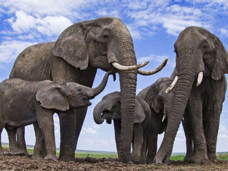 perch-elefanti-non-cancro-risposta-scienza-v3-497888-800x600-1
