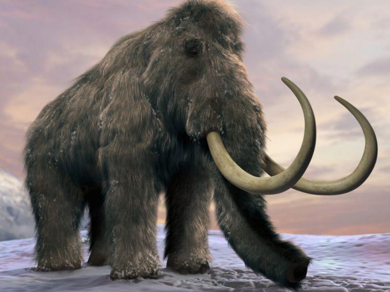 sequenziato-dna-mammut-pi-milione-anni-v3-500194-800x600-1