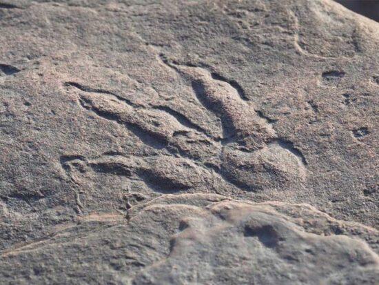 una-bambina-quattro-anni-scopre-un-impronta-dinosauro-spiaggia-v3-496503-800x600-1